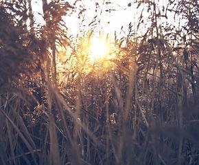 Feld-Sonnenuntergang