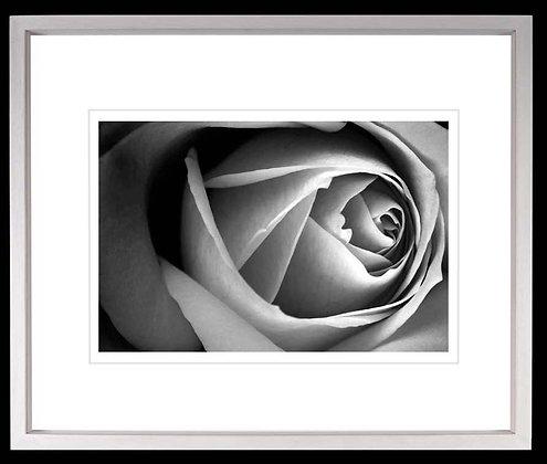 Rose A4 inkjet print White Ash Frame
