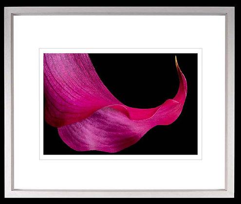 Flower A3 inkjet print White Ash Frame