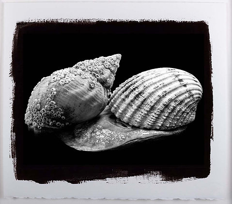 Shells A4 Platinum print