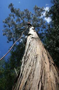tree-dismantle-treelands-cambridge.jpg