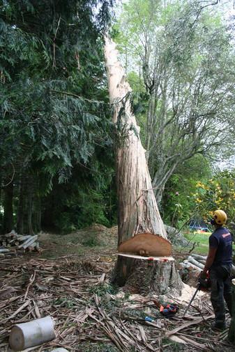 tree-felling-te-awamutu.jpg