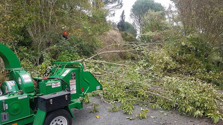 treelands-chipper-tree-removal.jpg