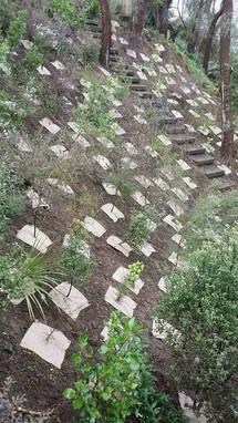 planting-restoration-treelands.jpg