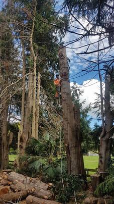 tricky-tree-removal-treelands-cambridge-nz.jpg