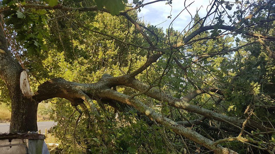 tree-felling-treelands.jpg
