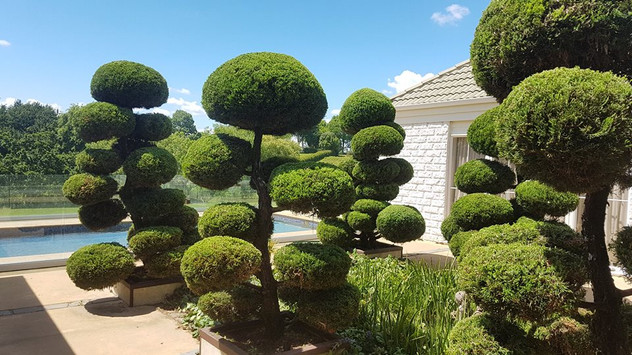 tree-care-treelands.jpg