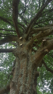 pruning-a-tree-treelands.jpg
