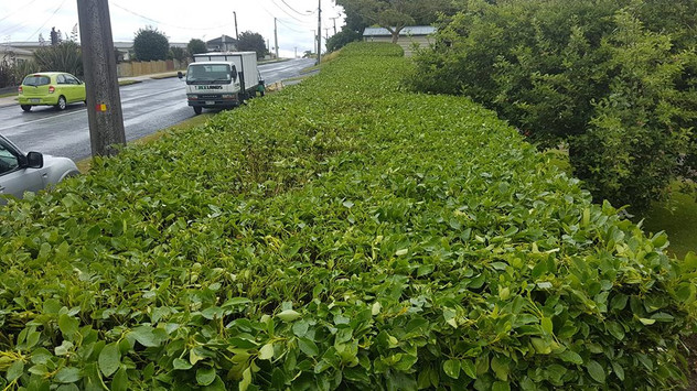 hedge-trimming-treelands.jpg