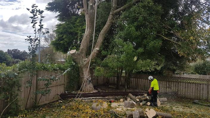 tree-removal-hamilton-nz-treelands.jpg