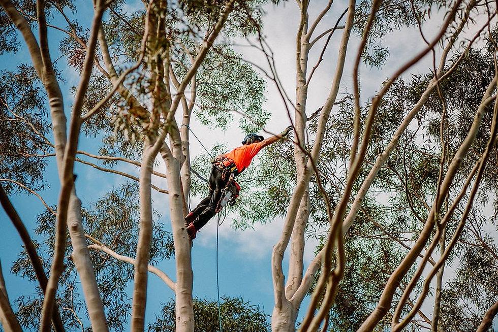 TreelandsBusinessBranding-Preview-4.jpg