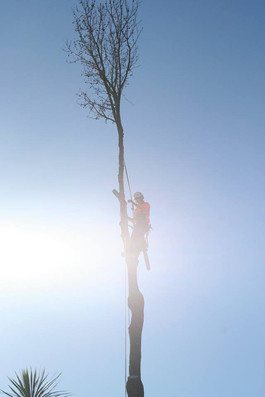 tree-removal-treelands.jpg