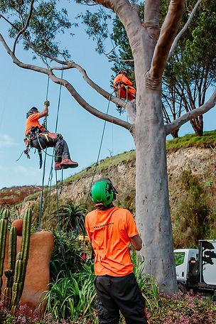 TreelandsBusinessBranding-WEBRES-133.jpg