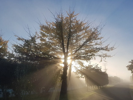 The not so dark side of trees (The fact about trees and shade)