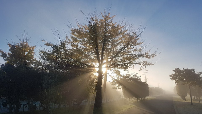 treelands-tree-sun-rise.jpg