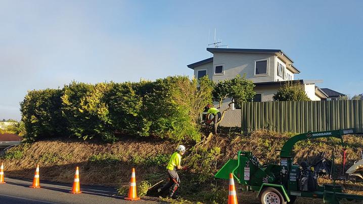 tricky-tree-removal-treelands-te-awamutu-nz.jpg