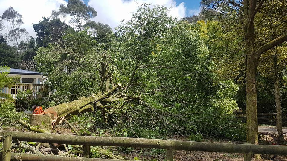 tree-felling-cambridge-nz.jpg