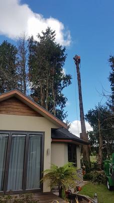 tricky-tree-removal-treelands-cambridge.jpg