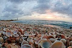 צדפות בחוף הים
