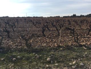 Aoc Côtes du Rhône à Châteauneuf de Gadagne : Le clos des Saumanes