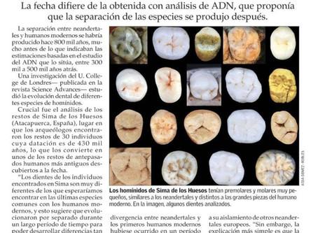 Análisis dental de homínidos: Neandertales y humanos se habrían separado hace 800 mil años