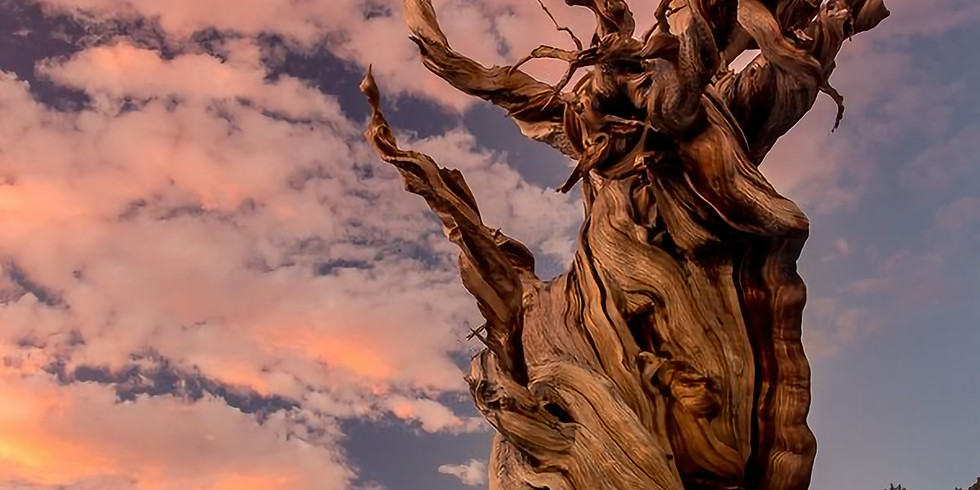 Great Basin Magical Connection: Experience Your Soul