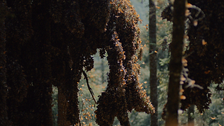 tree of butterflies.png