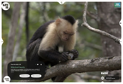 BBC LifeIs-web2.jpg