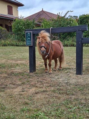 Tanguy le poney