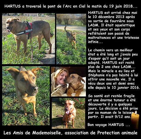 Hartus