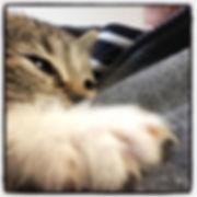 Pussycat