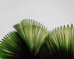 fan_palm (1 of 1)_edited.jpg
