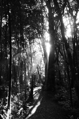 "Monochrome - ""Morning light"""