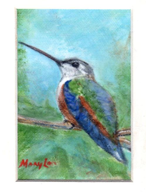 Hummingbird #4