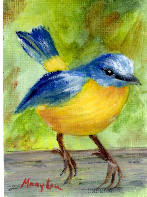 Yellow Robin 4