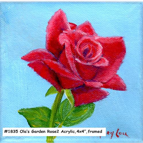 Ola's Garden-Red Rose 2