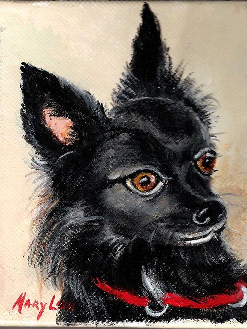 Black Chihuahua - Lovin' Life