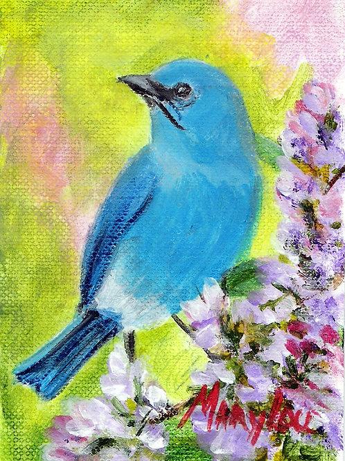 Mountain Blue Bird  4