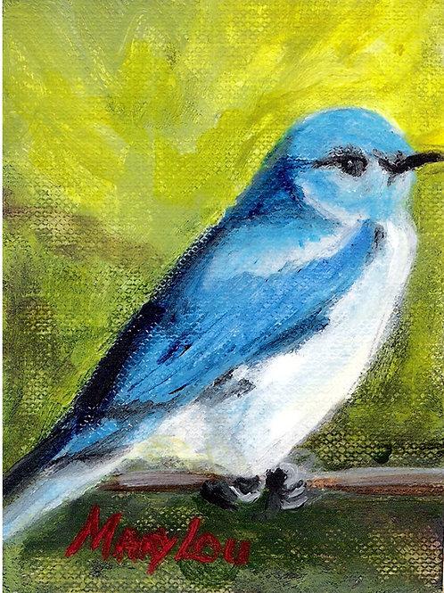 Mountain Blue Bird  3
