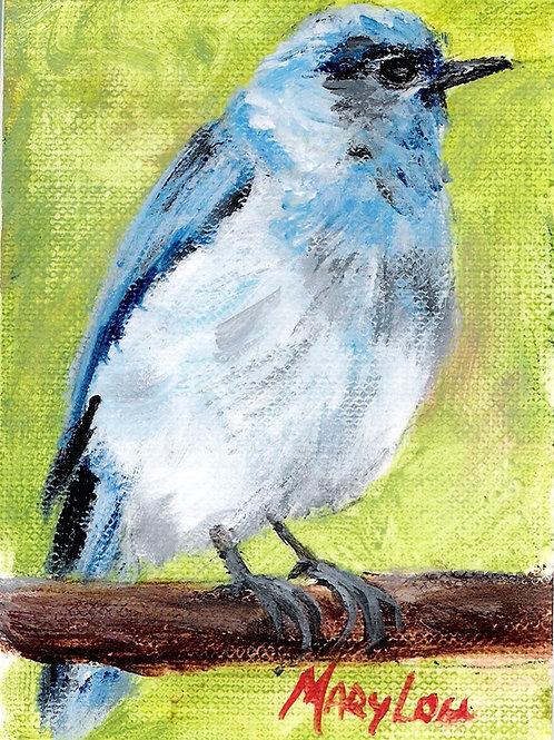 Mtn Blue Bird 5