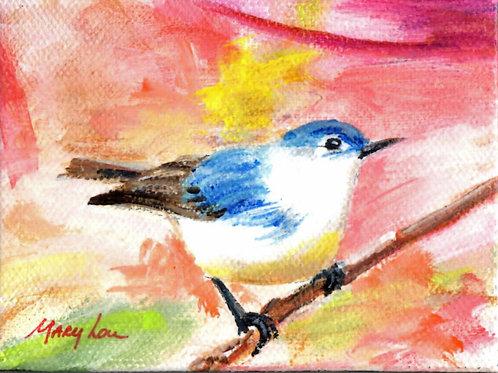 Blue-White Bird