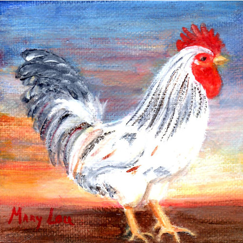 Up at Dawn-White Rooster