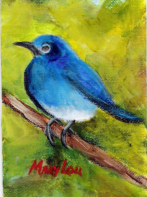 Mountain Blue Bird 1