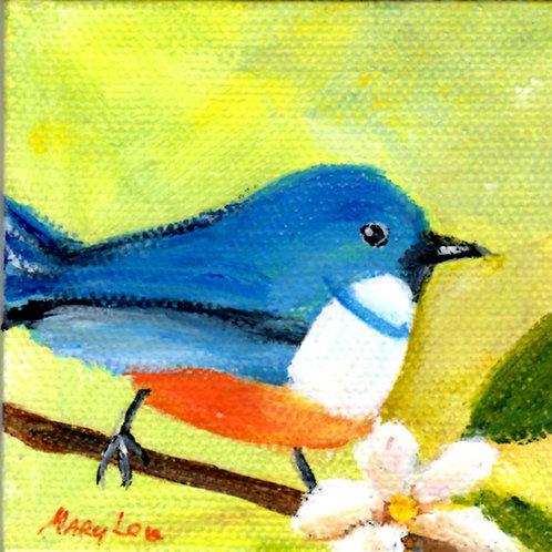 Cerulean Warbler 2