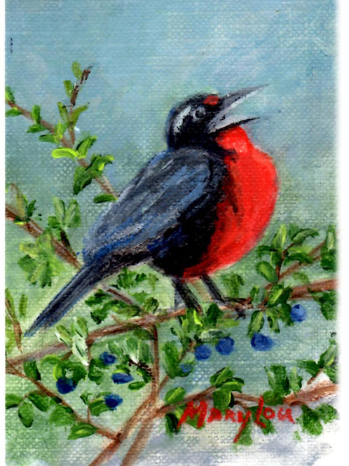 Meadowlark 5