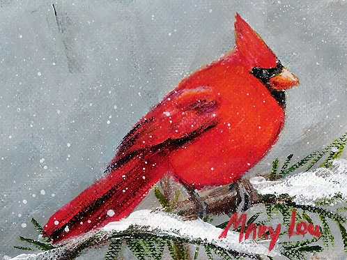 Male Winter Cardinal