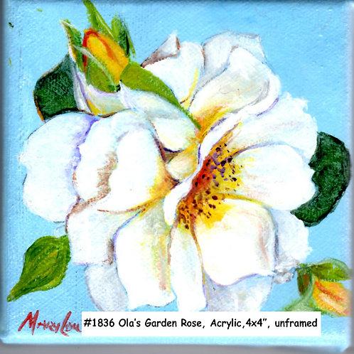 Ola's Garden-White Rose