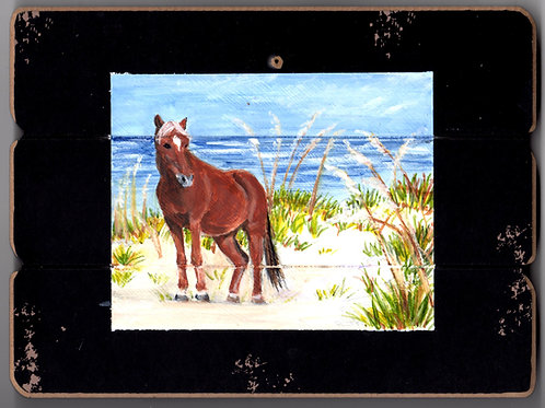 Chicoteague Island Horse #3