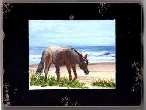 Chicoteague Island Horse #4