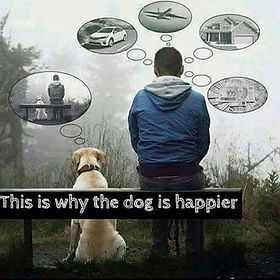 This is why the dog is happier.jpg